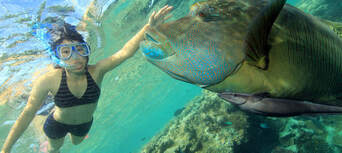 Whitsundays Overnight Reef Tour from Airlie Beach Thumbnail 2
