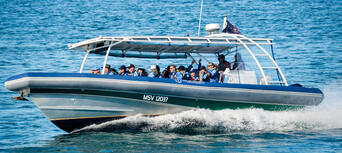 Byron Bay Whale Watching Premier Cruise Thumbnail 3