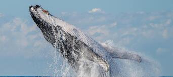 Byron Bay Whale Watching Premier Cruise Thumbnail 4