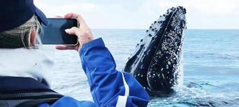 Byron Bay Whale Watching Premier Cruise Thumbnail 5