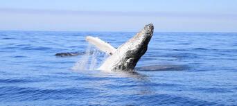 Byron Bay Whale Watching Premier Cruise Thumbnail 6