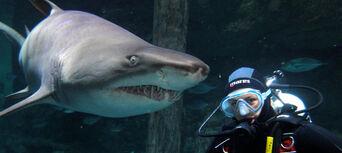 Sydney Aquarium Shark Dive Xtreme Thumbnail 2
