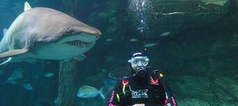 Sydney Aquarium Shark Dive Xtreme Thumbnail 1