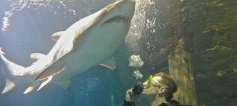 Sydney Aquarium Shark Dive Xtreme Thumbnail 3