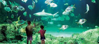 Sydney Aquarium Shark Dive Xtreme Thumbnail 4
