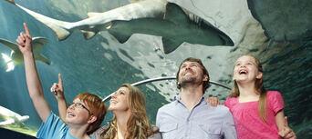 Sydney Aquarium Shark Dive Xtreme Thumbnail 5