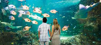 Sydney Aquarium Shark Dive Xtreme Thumbnail 6