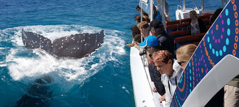 Hervey Bay 3 Hour Whale Watching Cruise Thumbnail 1