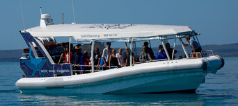Hervey Bay 3 Hour Whale Watching Cruise Thumbnail 6