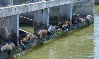 Coorong Full Day Cruise including Lunch Thumbnail 6