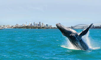 Sydney Weekend Whale Watching Cruise including Breakfast Thumbnail 2