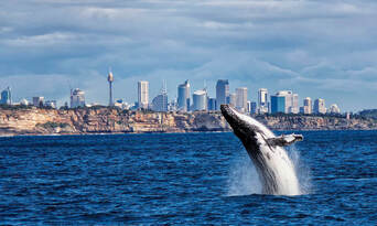 Sydney Weekend Whale Watching Cruise including Breakfast Thumbnail 4