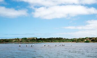Coorong Half Day Cruise including Lunch Thumbnail 2