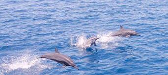 Low Isles Morning Cruise Thumbnail 3