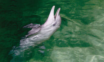 Tangalooma Marine Discovery Cruise with Dolphin Viewing & Transfers from Gold Coast Thumbnail 2