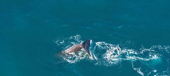 30 Minute Kaikoura Whale Watch Seaplane Flight Thumbnail 2