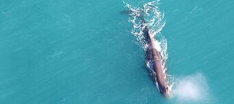 30 Minute Kaikoura Whale Watch Seaplane Flight Thumbnail 6