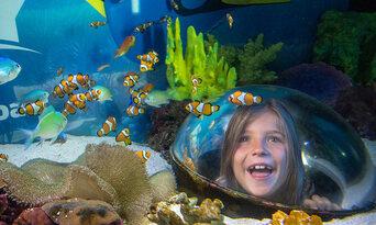 Mooloolaba Seafood Lunch Cruise and SEA LIFE Sunshine Coast Combo Thumbnail 6