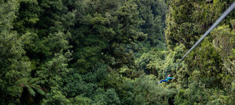 Rotorua Forest Zipline Ultimate Canopy Tour Thumbnail 5