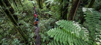 Rotorua Forest Zipline Ultimate Canopy Tour Thumbnail 6