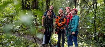 Rotorua Forest Zipline Ultimate Canopy Tour Thumbnail 1