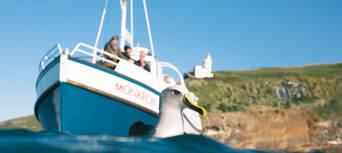 Otago Peninsula Wildlife Cruise Thumbnail 3