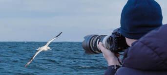 Otago Peninsula Wildlife Cruise Thumbnail 2