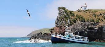 Otago Peninsula Wildlife Cruise Thumbnail 1