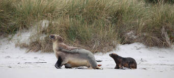 Otago Peninsula Wildlife Cruise Thumbnail 6