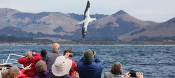 Larnach Castle Tour with Wildlife Cruise from Dunedin Thumbnail 2