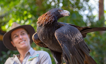 Currumbin Wildlife Sanctuary Tickets Thumbnail 2