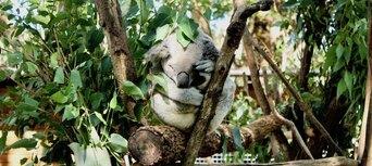 Currumbin Wildlife Sanctuary Tickets Thumbnail 3