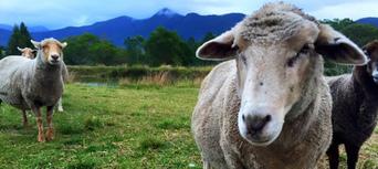 Half Day Animal Tour at Trevena Glen Thumbnail 4