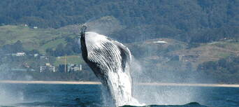 Coffs Harbour Whale Watching Tour - 2 Hours Thumbnail 2