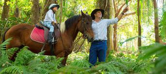 Cairns Horse Riding Tour Thumbnail 3