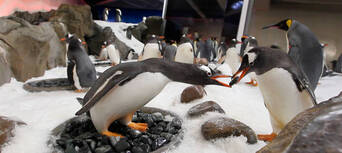 Penguin Encounter at SEA LIFE Melbourne Aquarium Thumbnail 1