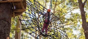 Coffs Harbour Treetop Adventure Park Thumbnail 3