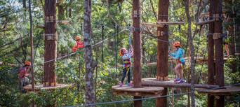 Coffs Harbour Treetop Adventure Park Thumbnail 2
