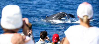 Whale Watch Cruises from Cairns Thumbnail 2