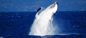 Whale Watch Cruises from Cairns Thumbnail 6
