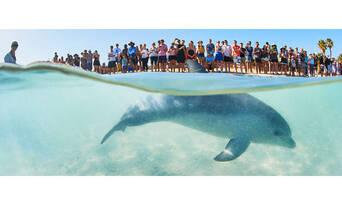 Scenic Flight From Kalbarri To Monkey Mia With A Dolphin Encounter Thumbnail 6