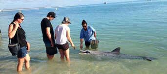 Scenic Flight From Kalbarri To Monkey Mia With A Dolphin Encounter Thumbnail 1