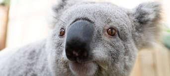 Symbio Wildlife Park Entry Tickets Thumbnail 5