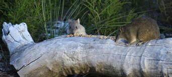 The Margaret River Nocturnal Wildlife Tour Thumbnail 3