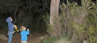The Margaret River Nocturnal Wildlife Tour Thumbnail 4