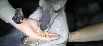 The Margaret River Nocturnal Wildlife Tour Thumbnail 5