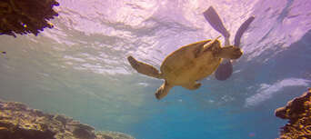 Lady Musgrave Island Day Tour Thumbnail 1