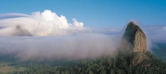 Sunshine Coast Hinterland Rainforest and Montville Village Tour Thumbnail 6