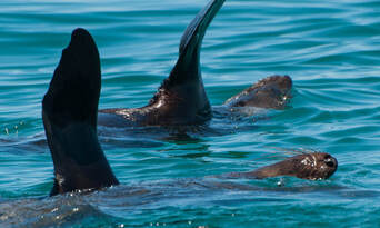 Dolphin and Seal Watching Eco Adventure Cruise Thumbnail 2