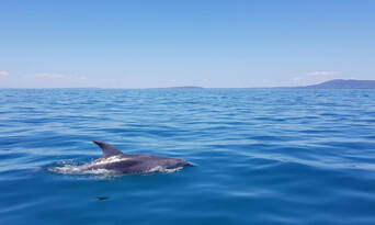 Dolphin and Seal Watching Eco Adventure Cruise Thumbnail 3